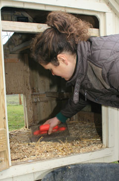choosing a hen house for easy cleaning