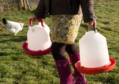 Carrying Chicken Water Containers