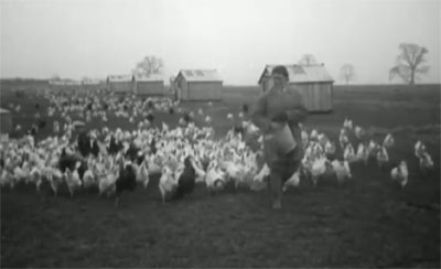 Feeding Chickens 1910