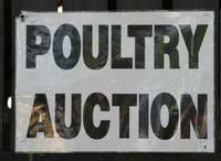 poultry auction