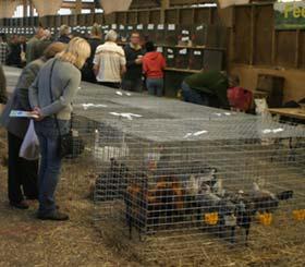 poultry show sale pens