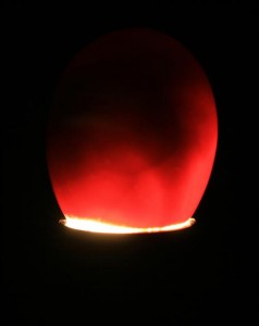 candling-eggs-day-14