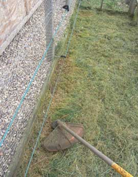 keeping-grass-short-under-electric-fencing-chickens
