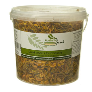 insect treats for chickens