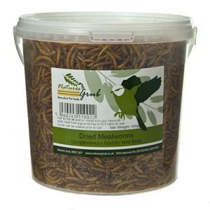 Mealworm treats for taming chickens