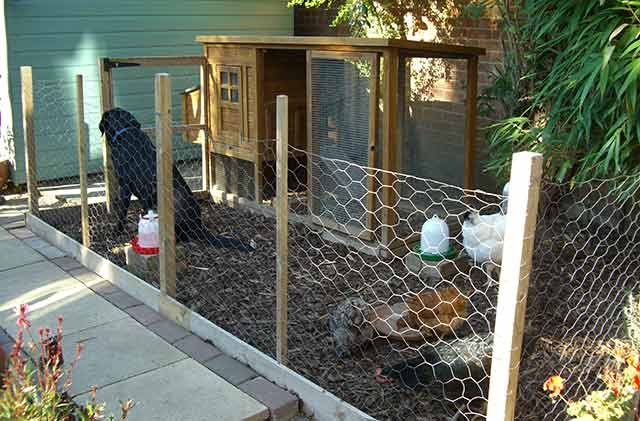 Chicken run in small garden