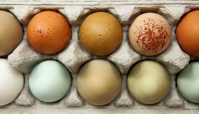 Coloured-Eggs