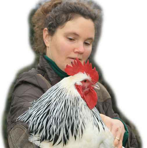 Keeping Chickens Icon