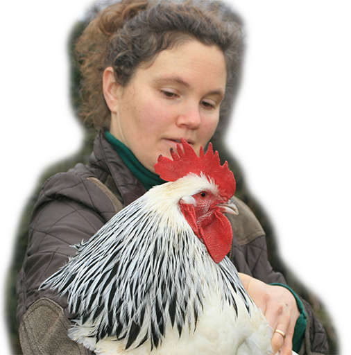 Keeping Chickens Website Icon